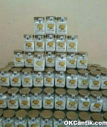 stok bibit collagen